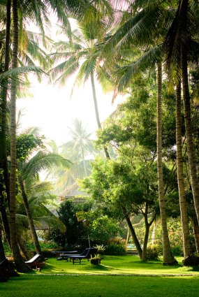 bali, palm trees, chrissie alexander, coconut spice yoga retreat, bali ocean paradise yoga retreat