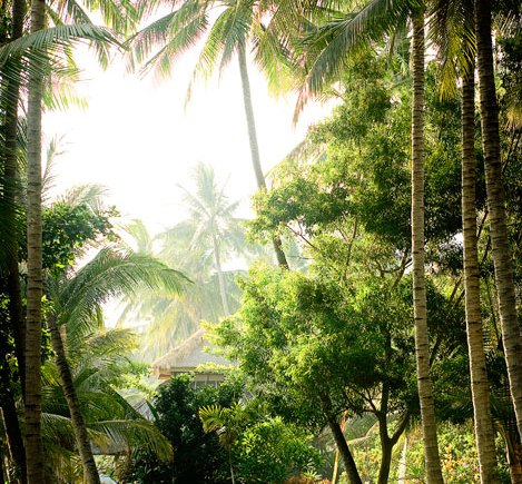 Bali retreat, yoga retreat, bali ocean paradise, palm trees, chrissie alexander, coconut spice yoga retreats, naturopath, nourishing food, retreat